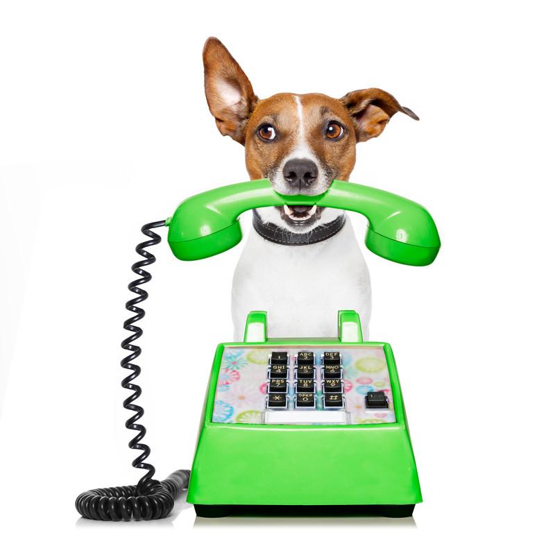 Call Marin County Dog Training