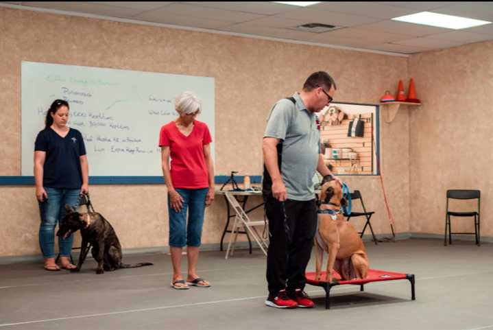 Joe Camacho Tucson Dog Trainer